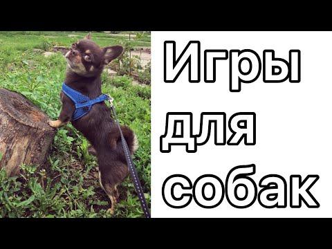 Развивающие игры для собак. 4 интересные идеи игр для собаки дома