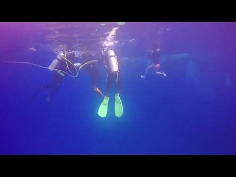 Bahamas Dec 2017 sharks safety stop 2