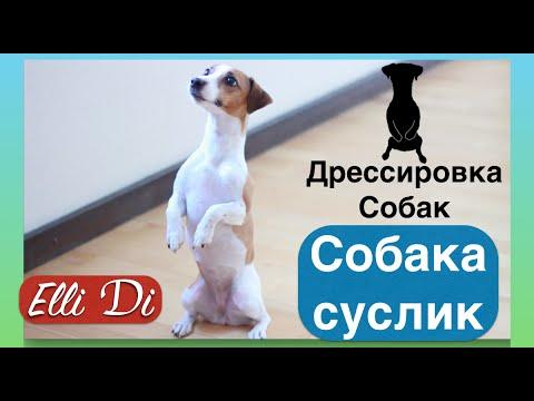 Как вытащить клеща у собаки | В домашних условиях. - YouTube
