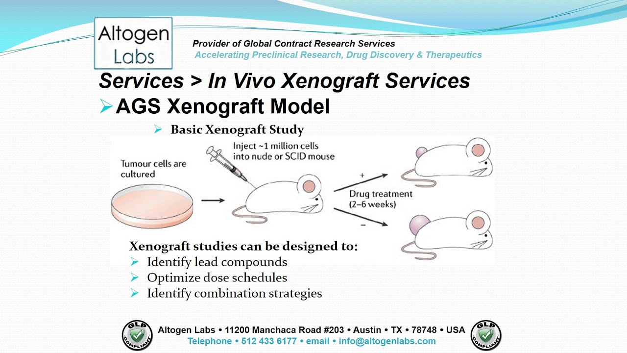 Gastric cancer xenograft mouse Pancreatic cancer xenograft mouse model
