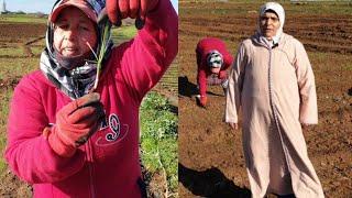 لالة فتيحة في عملها بمزرعة لالة حادة👍مراحل زراعة البصل