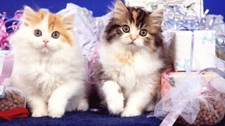 приколы смотреть бесплатно, смешные коты