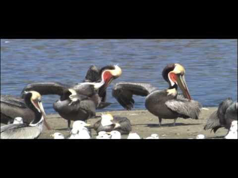 Birds Vertebrates | Biology | Nature