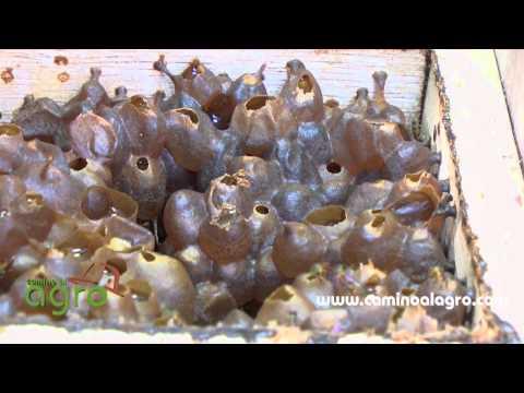 Apicultura ecológica - generacionnatura.org de YouTube · Alta definición · Duración:  5 minutos 7 segundos  · Más de 11.000 vistas · cargado el 24.11.2011 · cargado por Biocupón