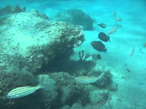 Snorkeling At Phil Foster Park Blue Heron Bridge West Palm Beach Florida