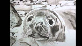 Baby Seal by Costaworkshop