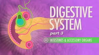 Digestive System, Part 3: Crash Course A&P #35