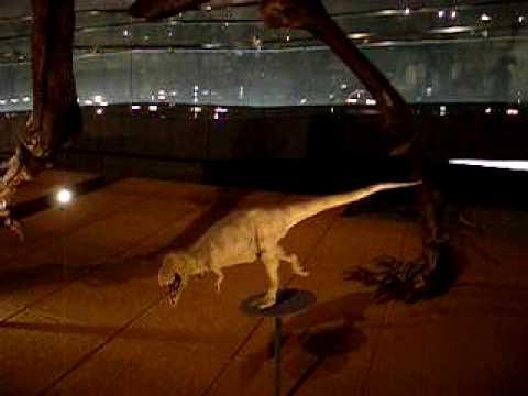 Fukui Prefectural Dinosaur Museum: Saurischians