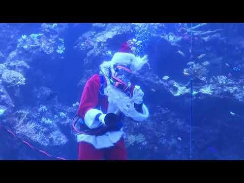 Josh Healy - Scuba Santa Dives in San Francisco Aquarium