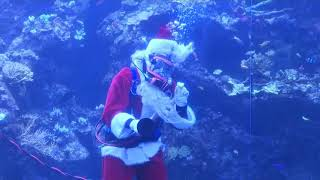 Scuba Santa dives in San Francisco aquarium