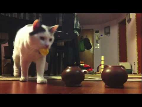 Matso dog-cat playing cups and balls
