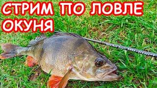 Стрим Fishing Today ЛОВЛЯ ОКУНЯ КАК ЛОВИТЬ ОКУНЯ СПИННИНГ