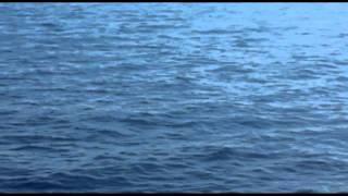 delfini croazia.mp4