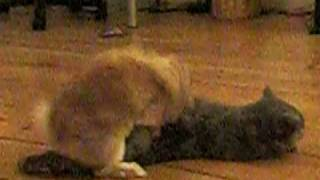 Bunny is making Love to Cat