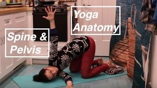 """Yoga ANATOMY Basics 7"": Spine & Pelvis- LauraGYoga"