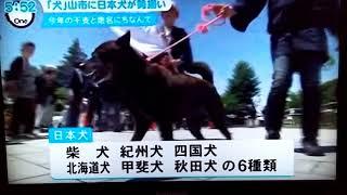 音声は効果音で♪)今年は戌年ということで、日本犬集結!!日本犬とは柴...