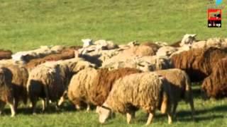 Ovinep (Elevage ovin) : Songe à ton orientation, choisis le mouton!