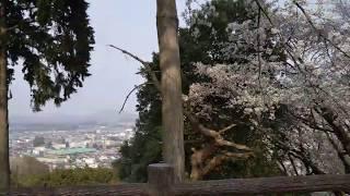 富士山(ふじやま)公園 栃木県鹿沼市花岡町 桜 2018年4月3日