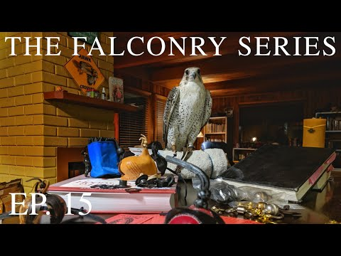 Hoods, Jesses & Leashes, Oh My! ✨ FALCON EQUIPMENT 2019 | The Falconry Series