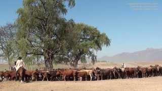 Estancia en Argentine : partager la vie des gauchos dans une estancia de Salta, Nord-Ouest Argentin