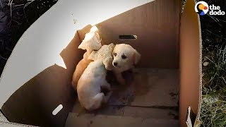 man-pulls-puppies-out-of-trash-every-single-day-the-dodo
