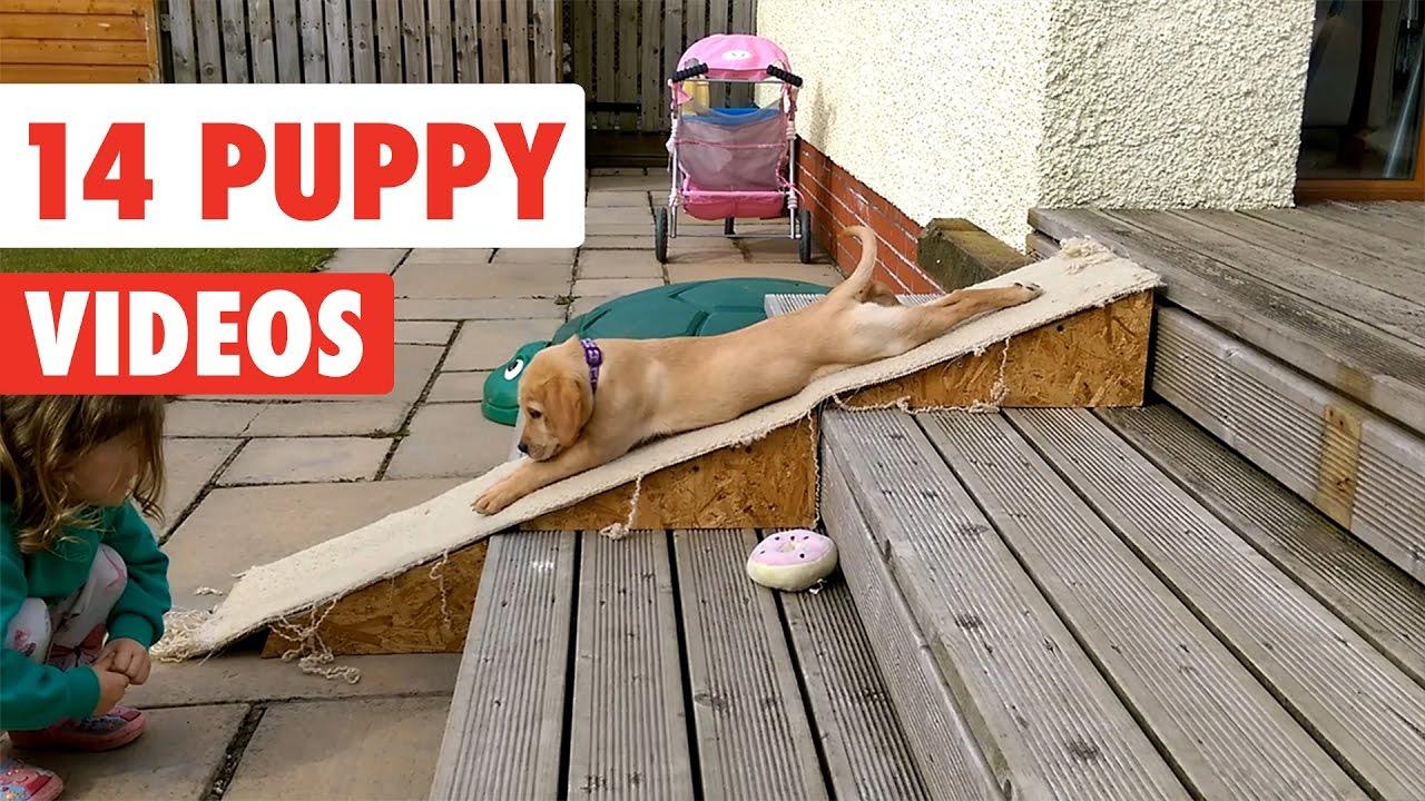 14 Humorous Pet Movies Compilation 2017