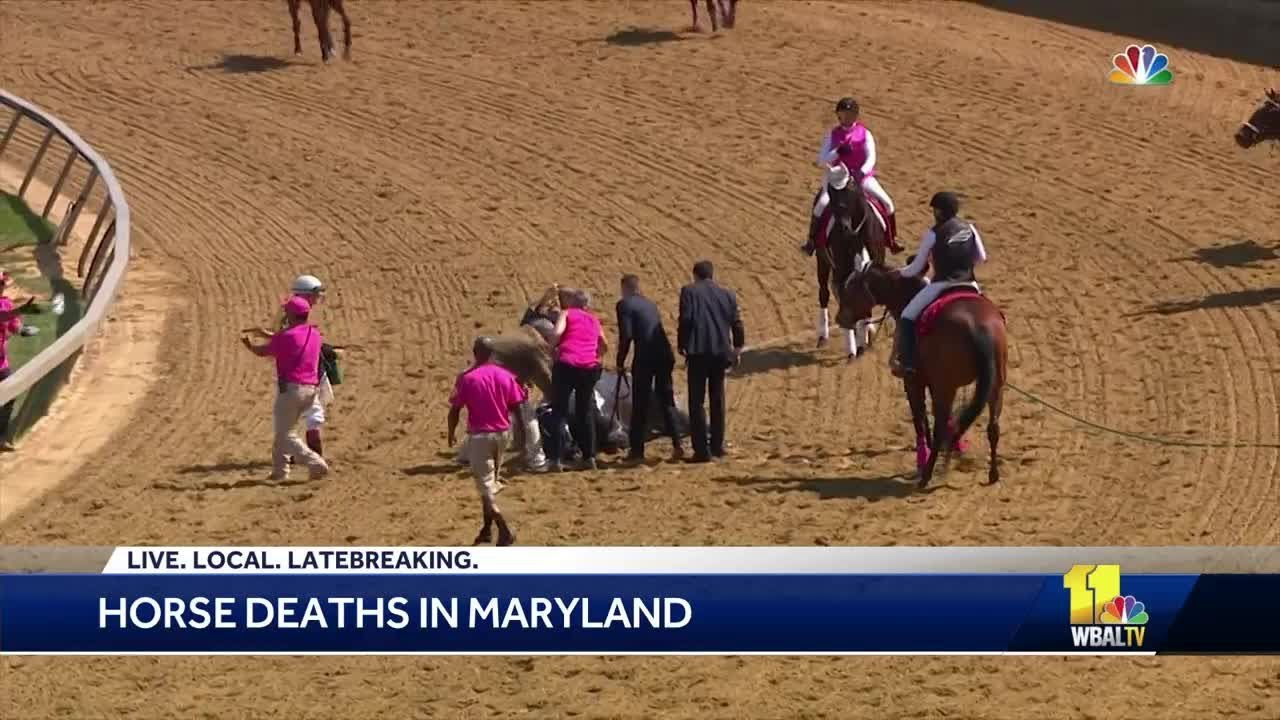 12th horse dies in Maryland racing