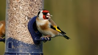 How to Attract Birds to Your Garden-Tutorial