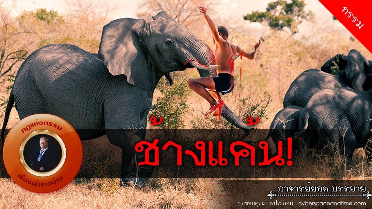 อาจารย์ยอด : ช้างแค้น [กรรม]