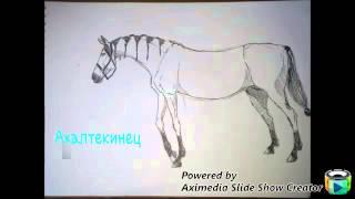 Мои рисунки лошадей♥♡.часть 1.