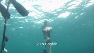 Miami Skin Divers