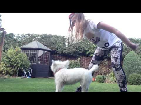 Dog Tricks - Westie Tricks