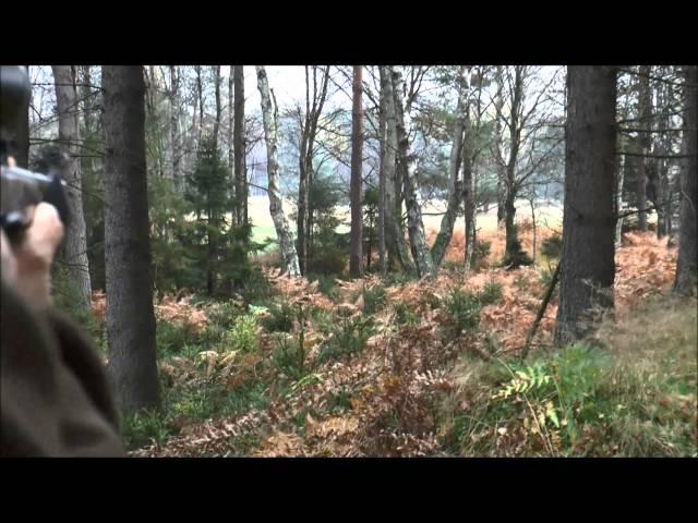 Jagd auf Rotwild - faszinierende Pirsch / Abschüsse - Teil 1