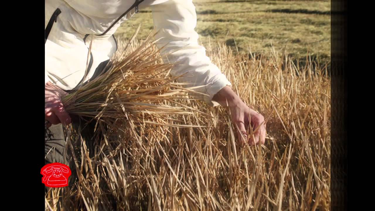 GMOs   The Lexicon of Sustainability   PBS Food