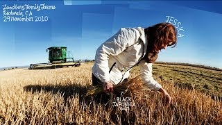 GMOs | The Lexicon of Sustainability | PBS Food