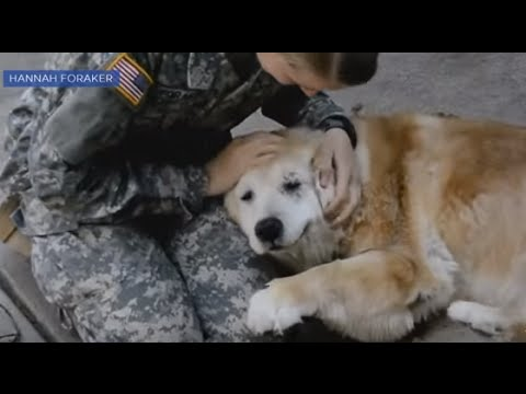 Deaf Dog Overwhelmed by Soldier, Owner Return