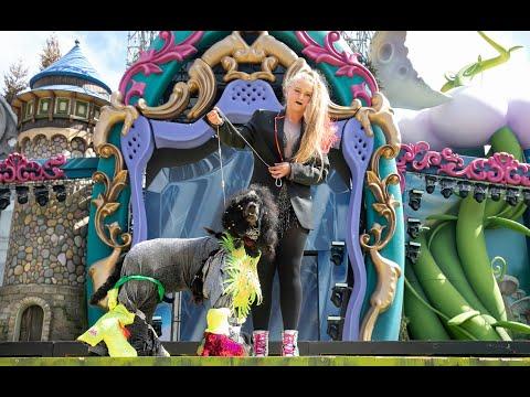 Carnaval Canino de Las Palmas de Gran Canaria y Carnaval de Día en Santa Catalina 2020