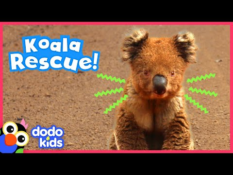 Brave Koala Asks Heroes For Help | Animal Videos for Kids | Dodo Kids