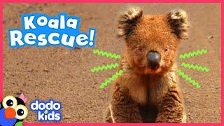 Brave Koala Asks Heroes For Help | Animal Videos for Kids | Dodo Kids