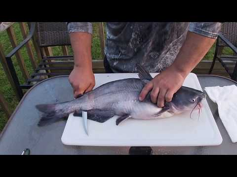 How To Clean A Catfish