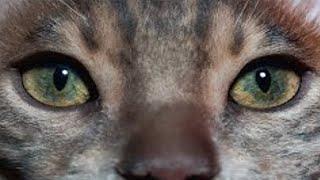 Katzenschnurren Als Therapie! Ein Mythos?