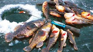 НЕ ЗРЯ ЖДАЛ ВЕЧЕРА Пришли РОТАНЫ МОНСТРЫ Рыбалка по первому льду