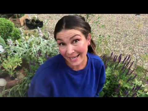10 Grönsaker jag direktsår i JULI månad Odling och direktsådd med Jessica Lyon