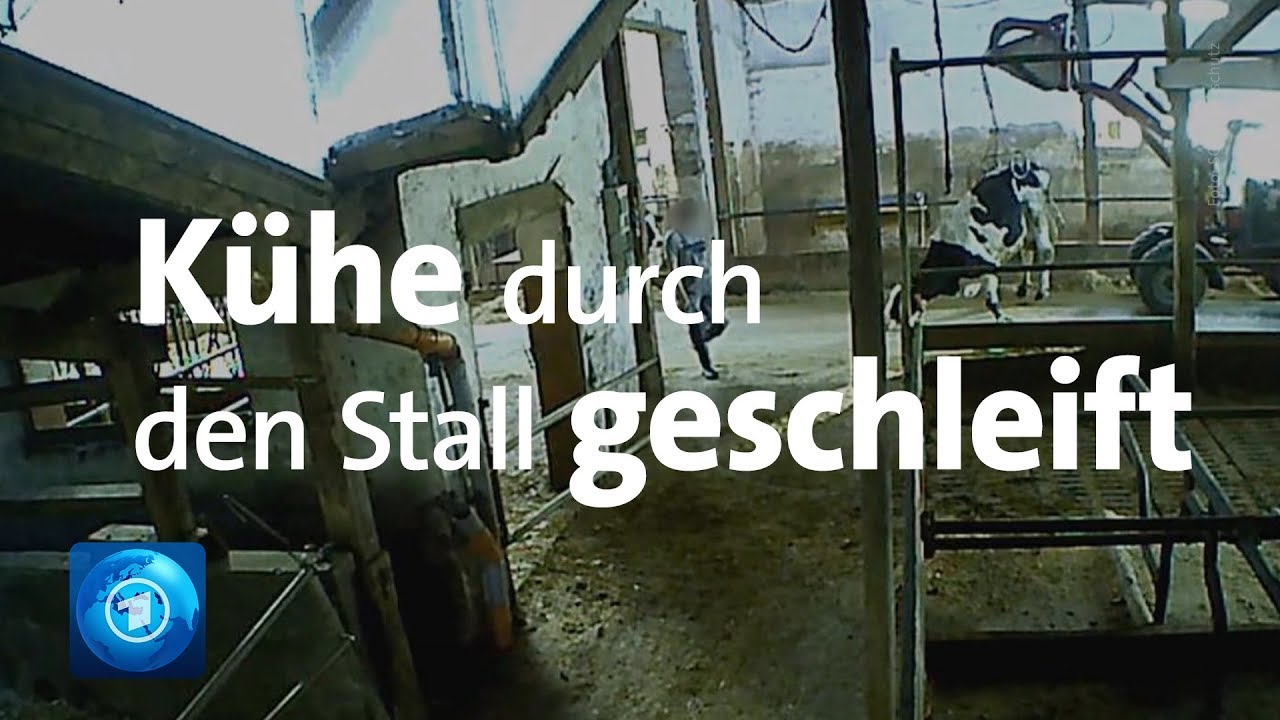 Todeskampf - Bayerns grösste Milchbauer als Tierquäler enttarnt