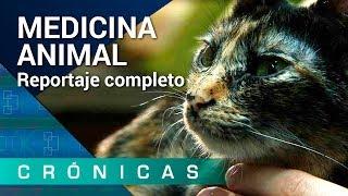 'Medicina animal' COMPLETO | Crónicas