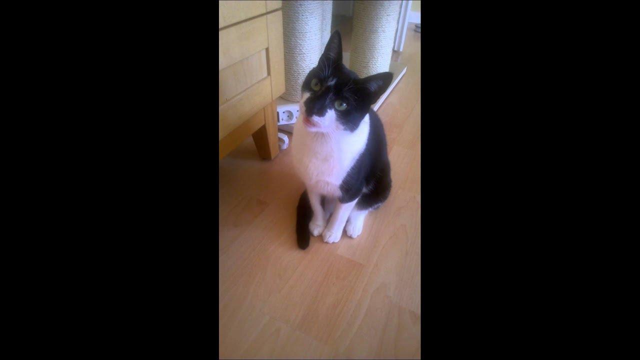 Youtube Cat Eye Tutorial: Grinning Cat Talks