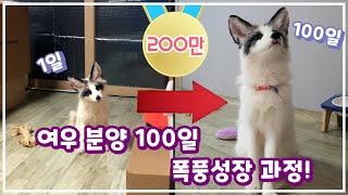 여우 육아 1~100일 영상 한눈에 보기!ㅣ여우 루비