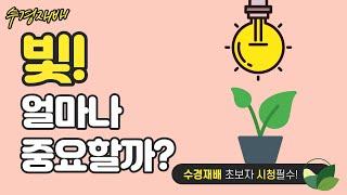 [수경재배] 빛은 식물 생육에 얼마나 관여할까요?