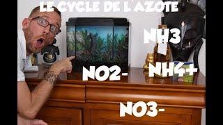 Y'A DE LA CHIMIE DANS UN AQUARIUM ?: Le cycle de l'azote