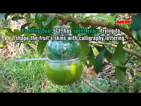 Calligraphy calabash in great demand as Vietnam's Lunar New Year approaches